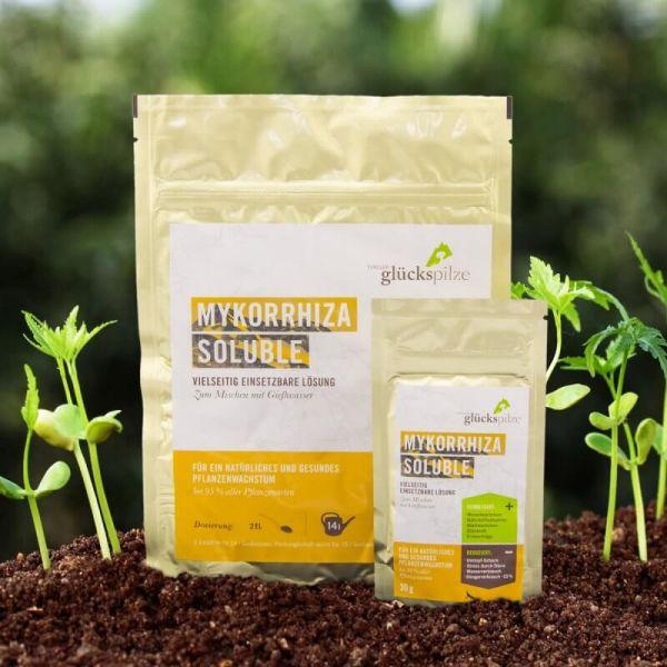 Mykorrhiza Pilz Soluble